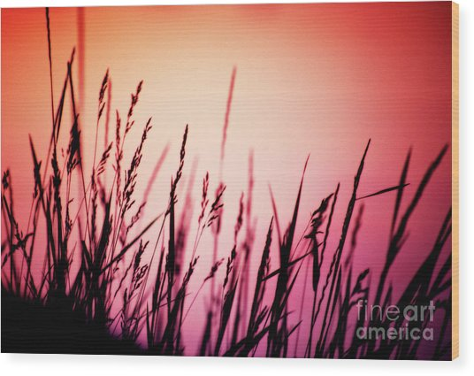 Wood Print featuring the photograph Wild Grasses by Scott Kemper