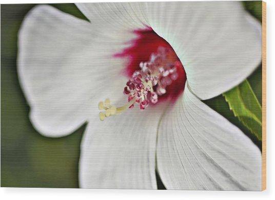 Wild Hibiscus Moscheutos_2a Wood Print
