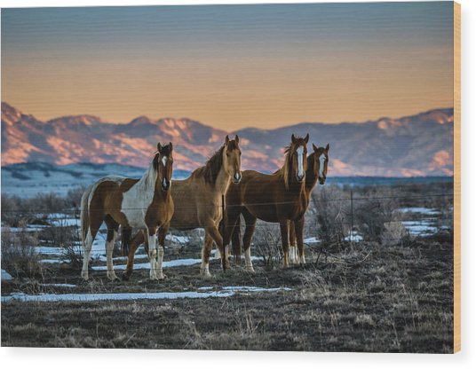 Wild Horse Group Wood Print