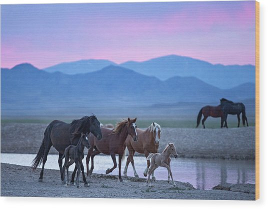 Wood Print featuring the photograph Wild Horse Sunrise by Wesley Aston