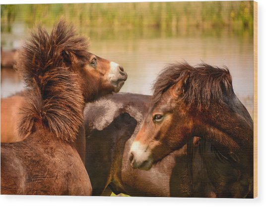Wild Horses 5 Wood Print