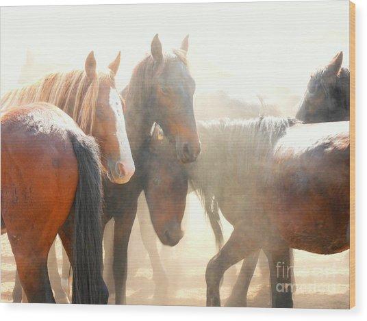 Wild Horses - Australian Brumbies 2 Wood Print