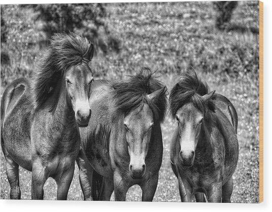 Wild Horses Bw1 Wood Print