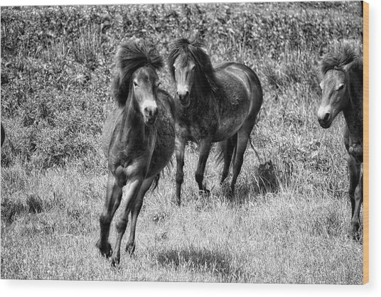 Wild Horses Bw4 Wood Print