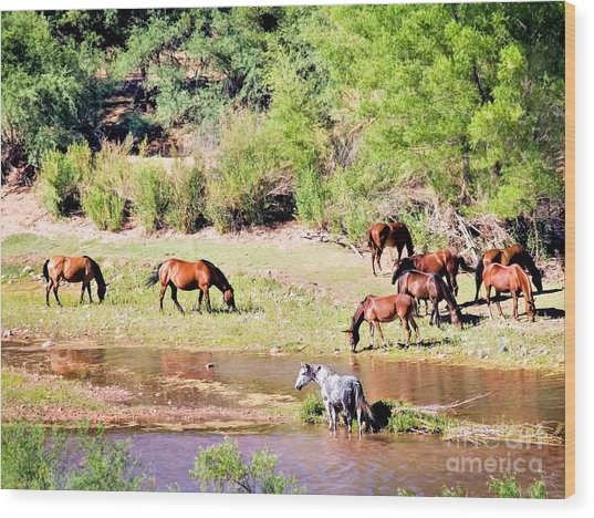 Wild Horses Grazing At Waterhole  Wood Print