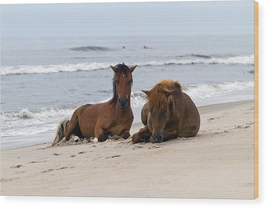 Wild Horses Of Assateague Island Wood Print