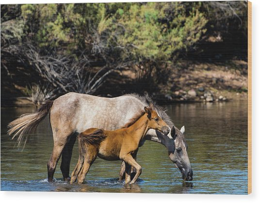 Wild Horses On The Salt River Wood Print