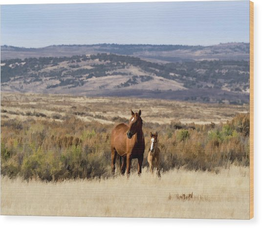 Wild Mare With Young Foal In Sand Wash Basin Wood Print