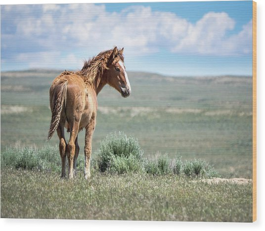 Wild Mustang Colt Of Sand Wash Basin Wood Print