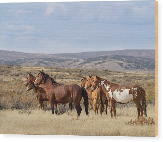 Wild Mustang Family Band In Sand Wash Basin Wood Print