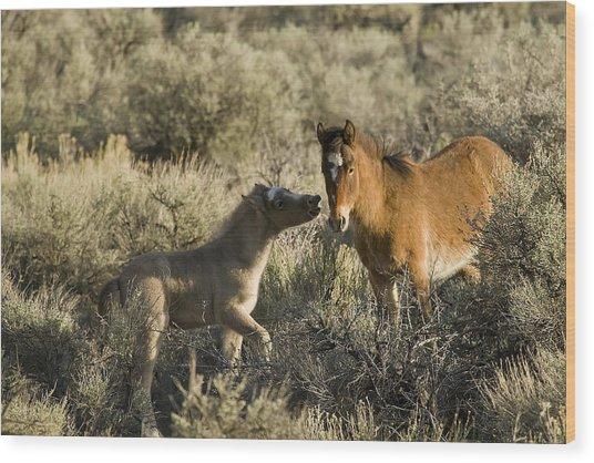 Wild Mustang Foal Horses Wood Print