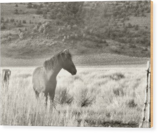 Wild Mustang Of Adobe Valley Eastern Sierra Wood Print