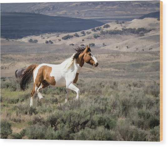 Wild Mustang Stallion On The Move In Sand Wash Basin Wood Print