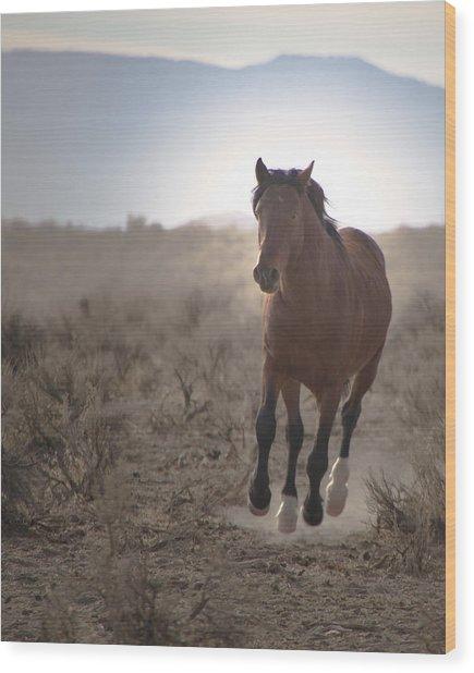 Wild Mustang Stallion Running Wood Print