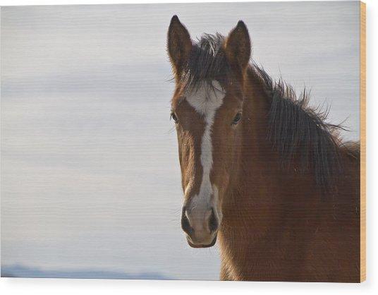 Wild Mustang Yearling Wood Print