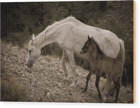 Wild Mustangs Of New Mexico 22 Wood Print