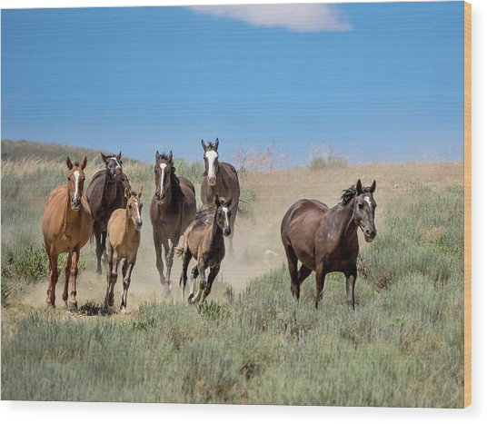 wild mustangs on the run to the water hole in Sand Wash Basin Wood Print
