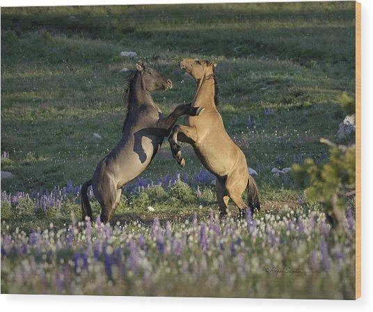 Wild Mustangs Playing 1 Wood Print