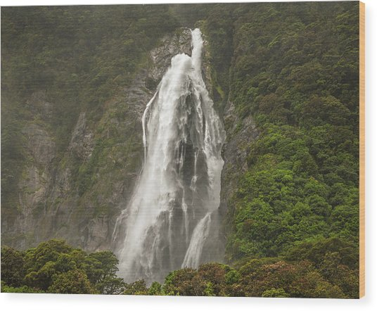 Wild New Zealand Wood Print