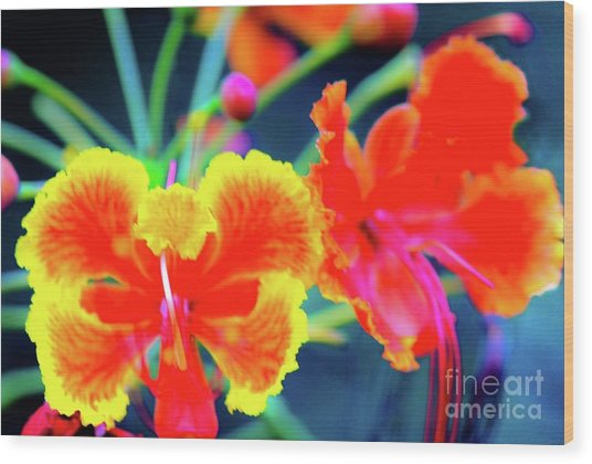 Wild Orchids In Hawaii Wood Print
