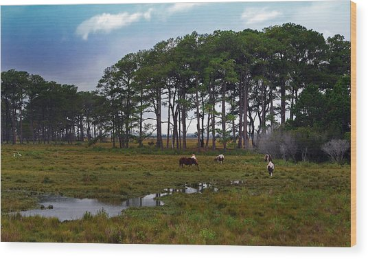 Wild Ponies Of Assateague Wood Print