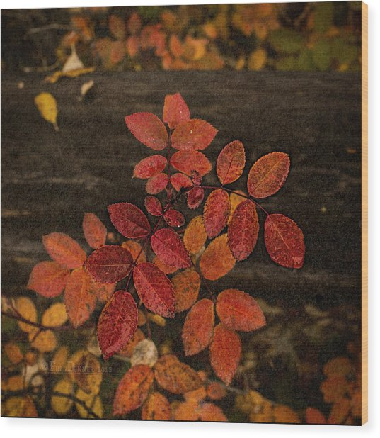 Wood Print featuring the photograph Wild Rose Leaves by Fred Denner