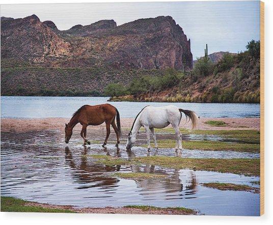 Wild Salt River Horses At Saguaro Lake Arizona Wood Print
