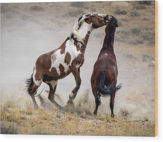 Wild Stallion Battle - Picasso And Dragon Wood Print