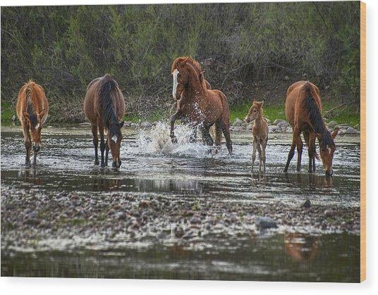 Wild Stallion In Salt River Wood Print