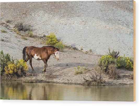 Wild Stallion Of Sand Wash Basin, Raindance Wood Print
