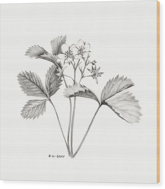 Wild Strawberry Drawing Wood Print