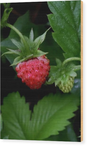Wild Strawberry Wood Print