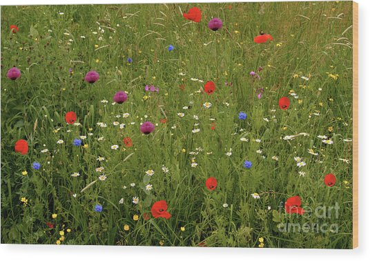 Wild Summer Meadow Wood Print