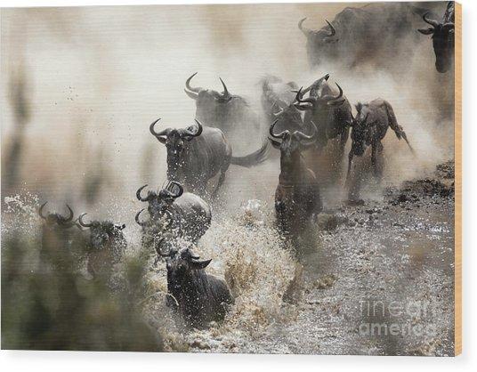 Wildebeest Herd Crossing The Mara River Wood Print