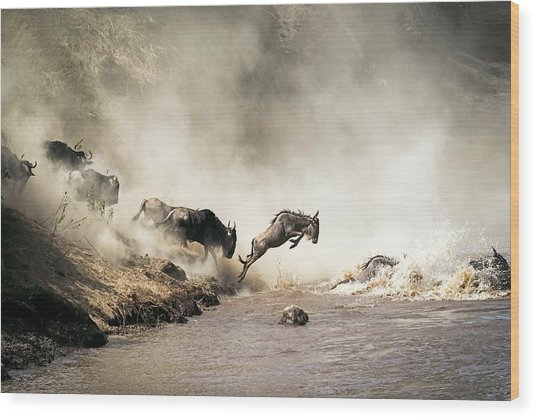Wildebeest Leaping In Mid-air Over Mara River Wood Print