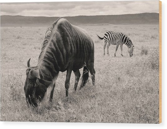 Wood Print featuring the photograph Wildebeest And Zebra by Stefano Buonamici