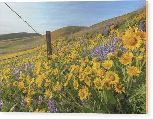 Wildflower Bonanza Wood Print