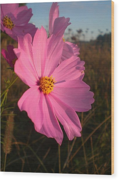 Wildflower Greeting The Day II Wood Print by Wendy Robertson