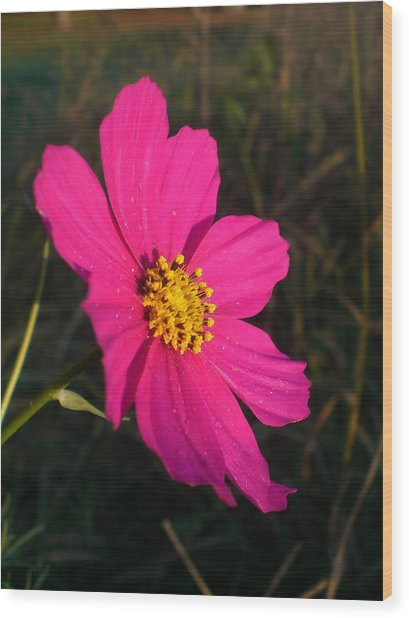 Wildflower Greeting The Day Wood Print by Wendy Robertson