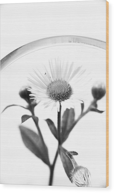 Wildflower In A Wine Glass Black And White Wood Print