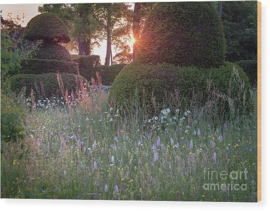 Wildflower Meadow At Sunset, Great Dixter Wood Print