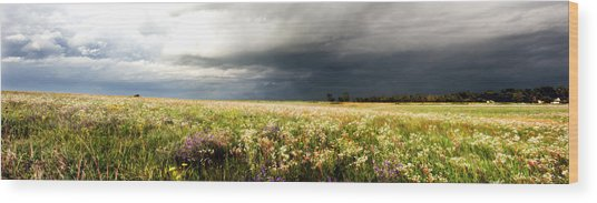Wildflower Panorama 2008 Wood Print