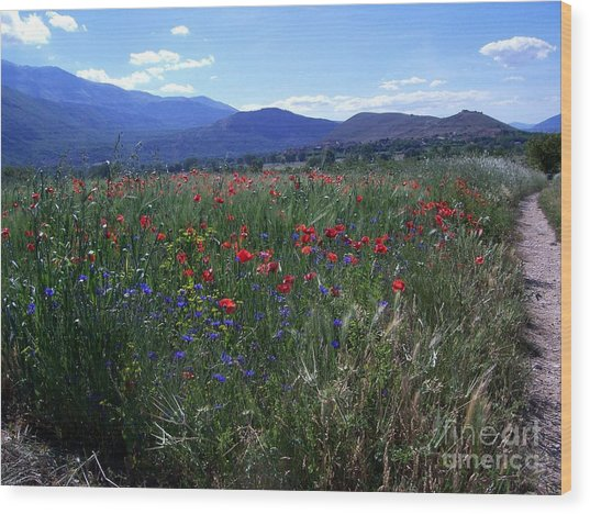 Wildflower Path Wood Print