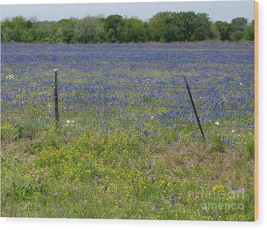 Wildflowers - Blue Horizon Wood Print by Lucyna A M Green
