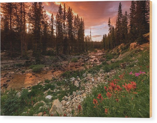 Wildflowers Along The Provo River. Wood Print by Johnny Adolphson