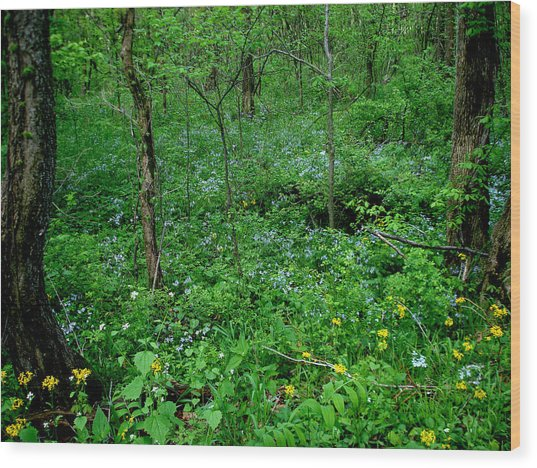 Wildflowers And Woods Wood Print by Martin Morehead