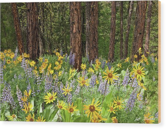 Balsamroot And Lupine In A Ponderosa Pine Forest Wood Print