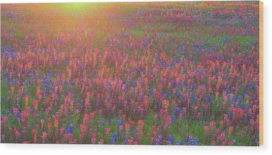 Wildflowers In Texas Wood Print