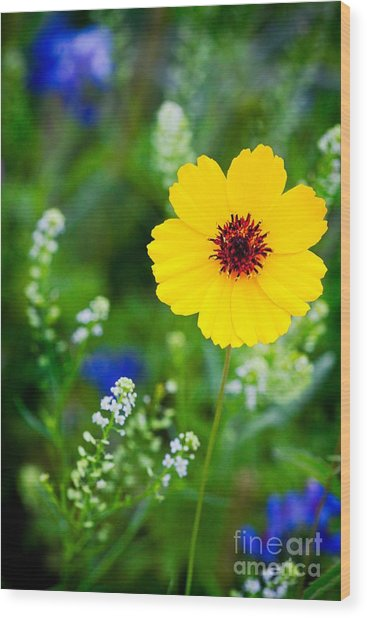 Wildflowers In The Hill Country Of Central Texas Wood Print