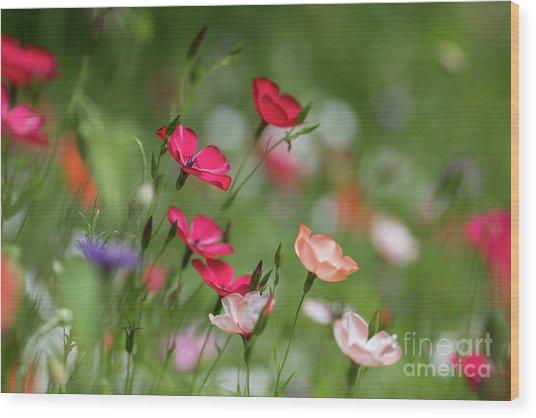 Wildflowers Meadow Wood Print